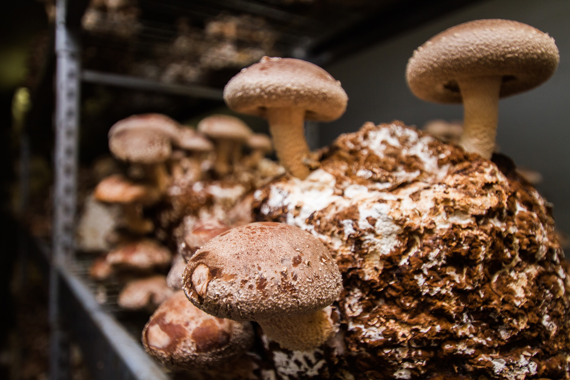 Forest Fungi - Growing Gourmet Mushrooms